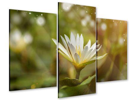 Acrylglasbild 3-teilig modern Lilien-Lichtspiel