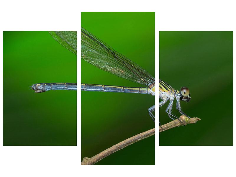 Acrylglasbild 3-teilig modern Die Libelle