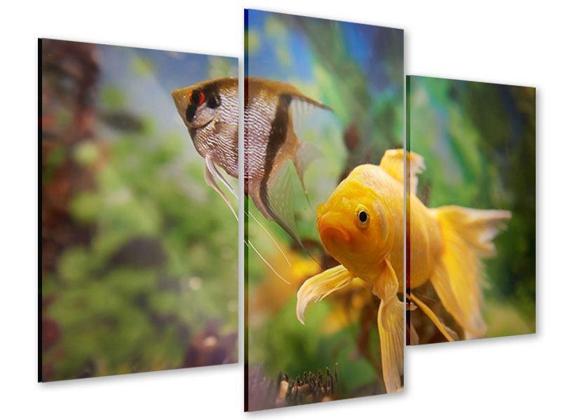 Acrylglasbild 3-teilig modern Bunte Fische