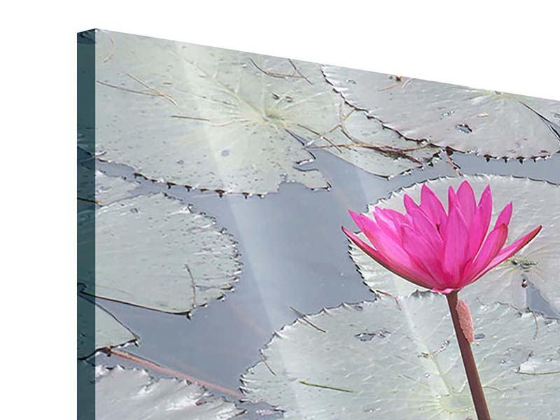 Acrylglasbild 3-teilig modern Sprung in den Seerosenteich