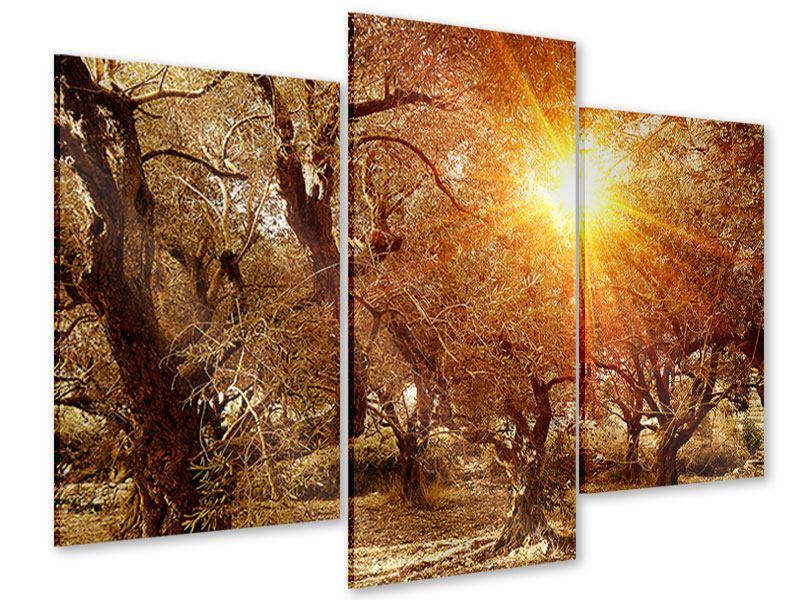Acrylglasbild 3-teilig modern Olivenbäume im Herbstlicht
