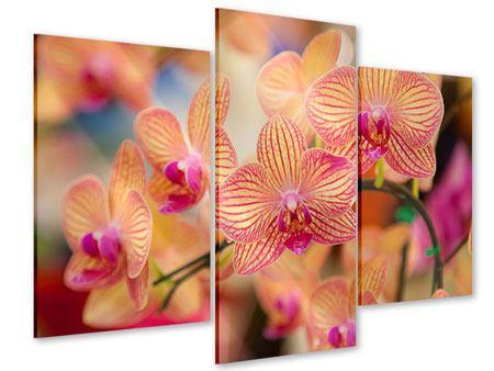 Acrylglasbild 3-teilig modern Exotische Orchideen