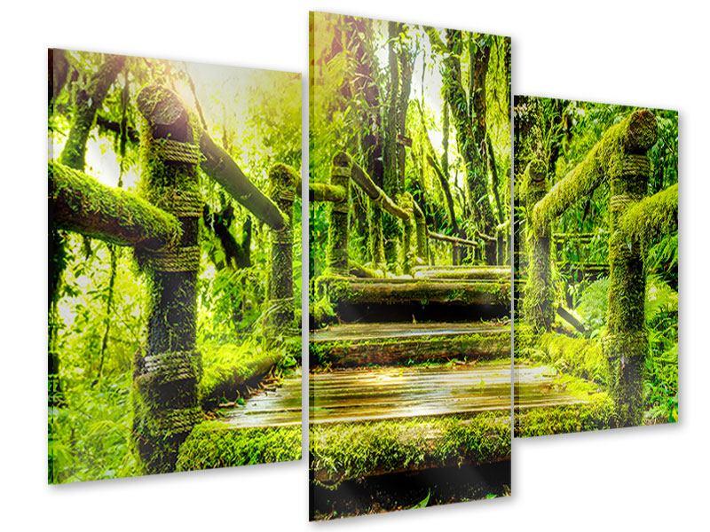 Acrylglasbild 3-teilig modern Moos