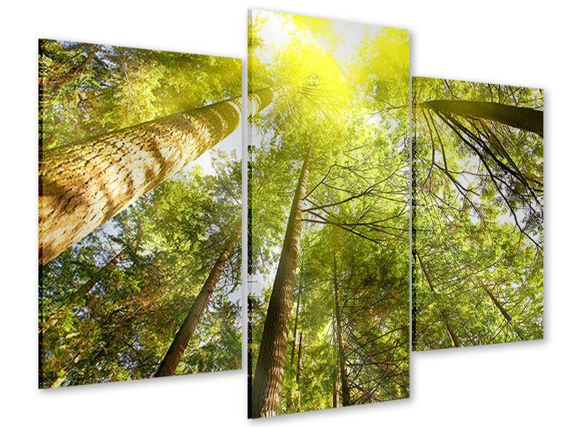 Acrylglasbild 3-teilig modern Baumkronen in der Sonne