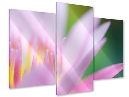 Acrylglasbild 3-teilig modern XXL-Lilie