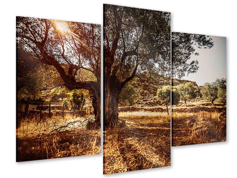 Acrylglasbild 3-teilig modern Olivenhain