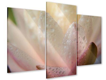 Acrylglasbild 3-teilig modern Close Up Seerose