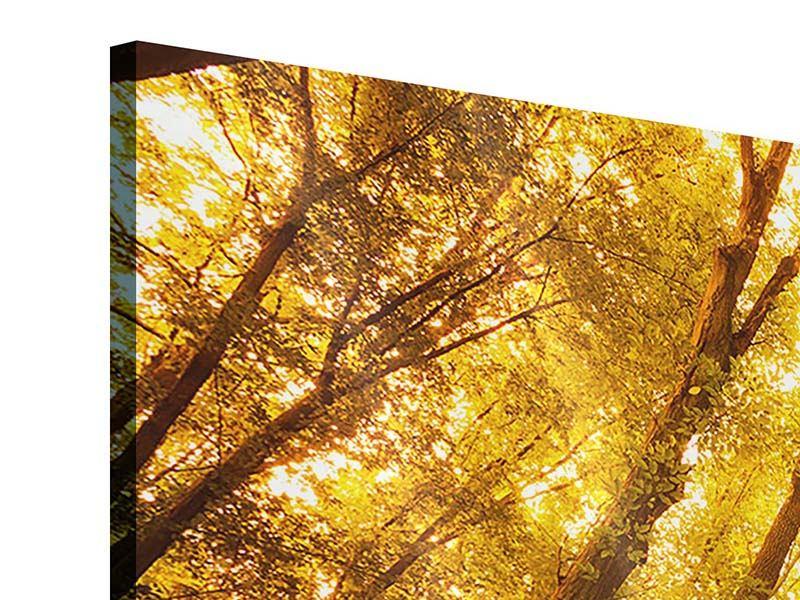 Acrylglasbild 3-teilig modern Herbstwald