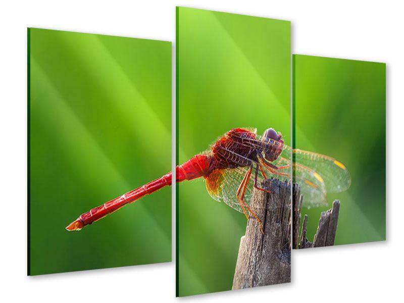 Acrylglasbild 3-teilig modern Libelle XXL