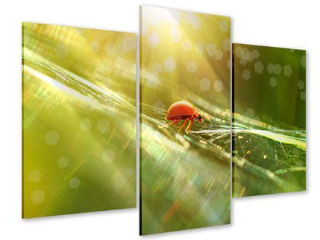 Acrylglasbild 3-teilig modern Marienkäfer im Sonnenlicht