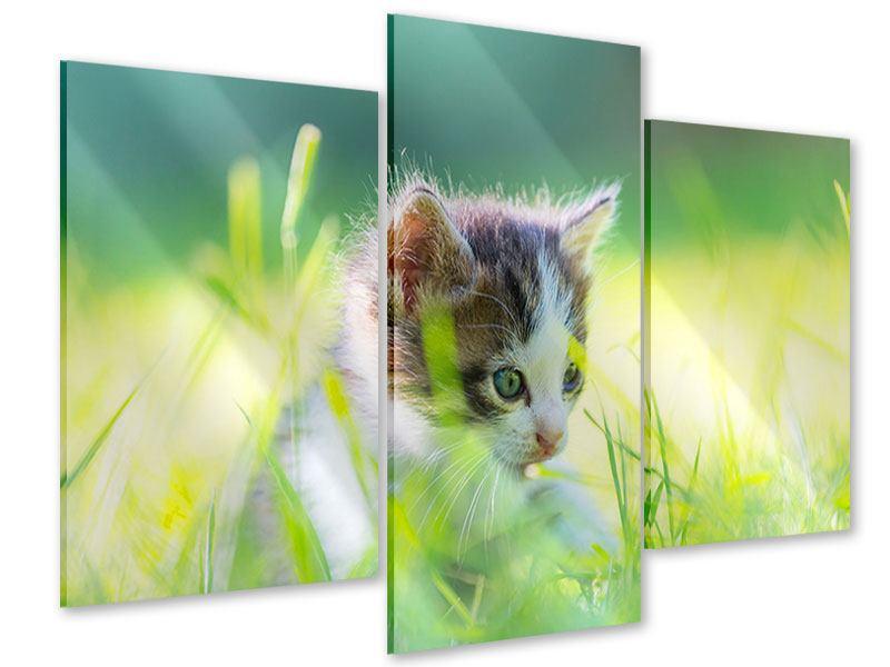 Acrylglasbild 3-teilig modern Kitten