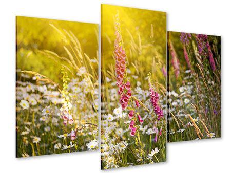Acrylglasbild 3-teilig modern Sommerliche Blumenwiese