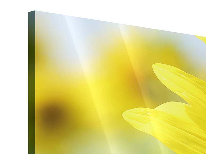 Acrylglasbild 3-teilig modern Die Blume der Sonne