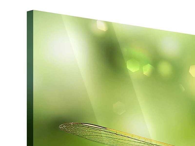 Acrylglasbild 3-teilig modern XXL-Libelle
