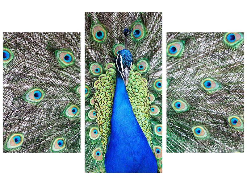 Acrylglasbild 3-teilig modern Blauer Pfau