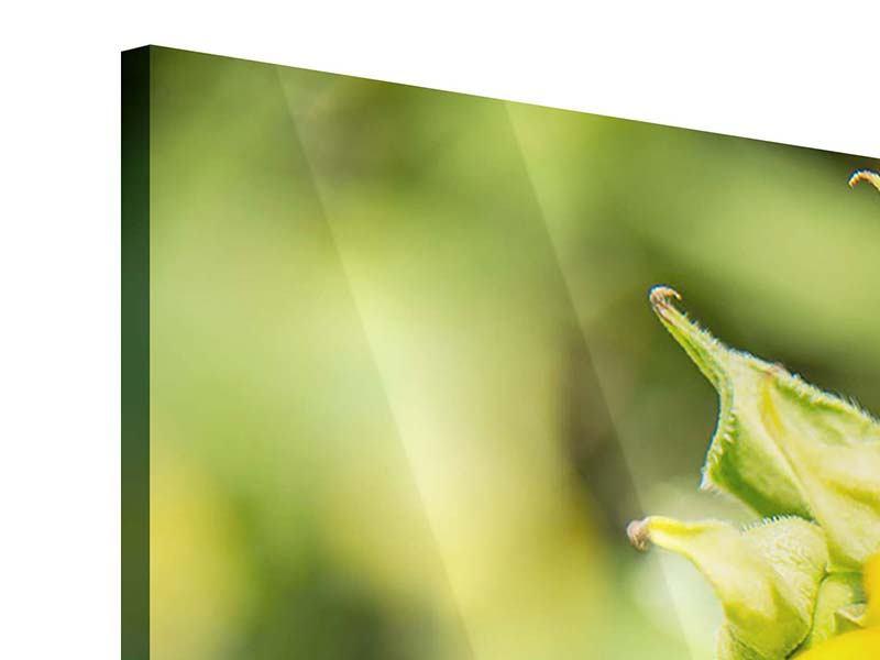 Acrylglasbild 3-teilig modern Wilde Sonnenblume