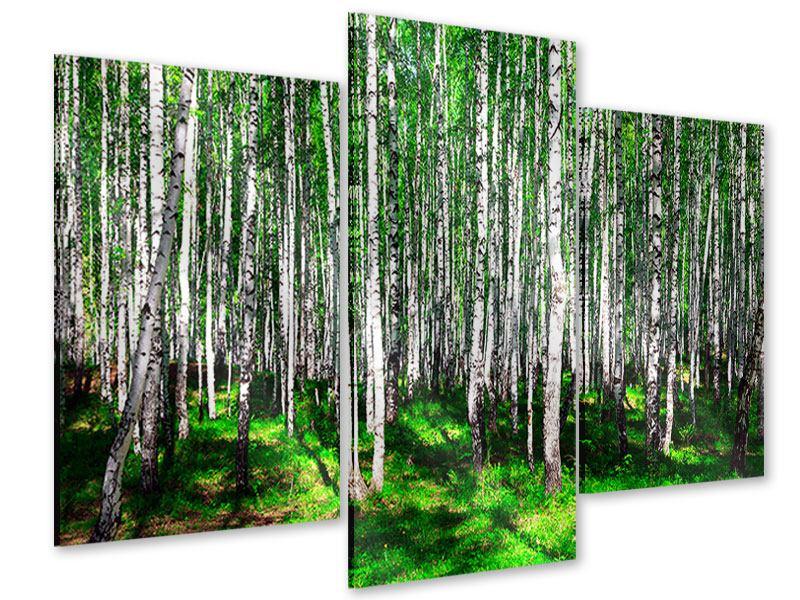 Acrylglasbild 3-teilig modern Sommerlicher Birkenwald