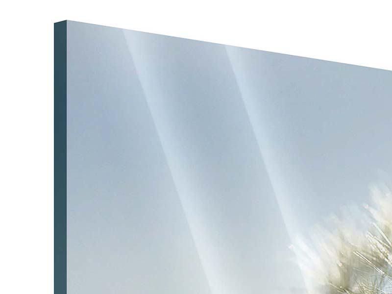 Acrylglasbild 3-teilig modern Löwenzahn XXL