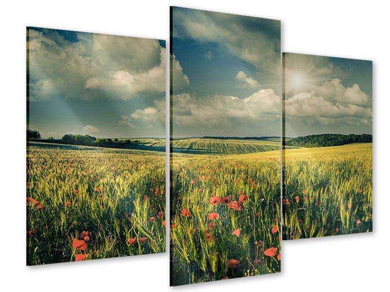Acrylglasbild 3-teilig modern Der Mohn im Weizenfeld