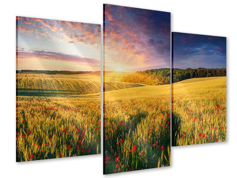 Acrylglasbild 3-teilig modern Ein Blumenfeld bei Sonnenaufgang