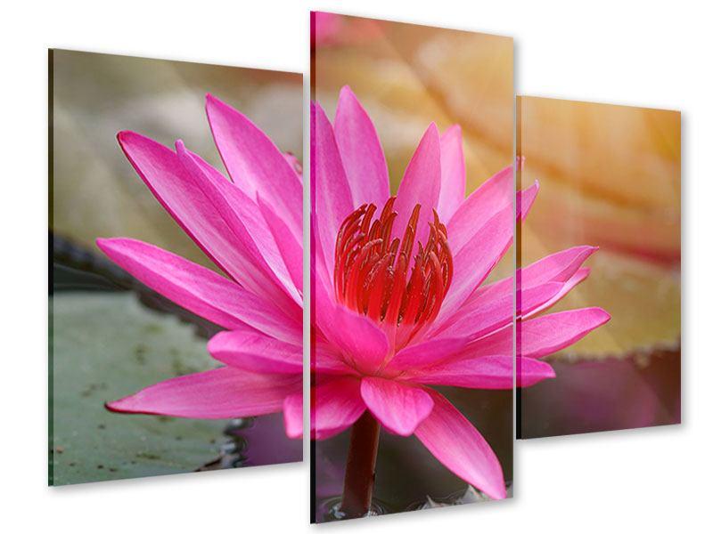 Acrylglasbild 3-teilig modern Sonnige Seerose