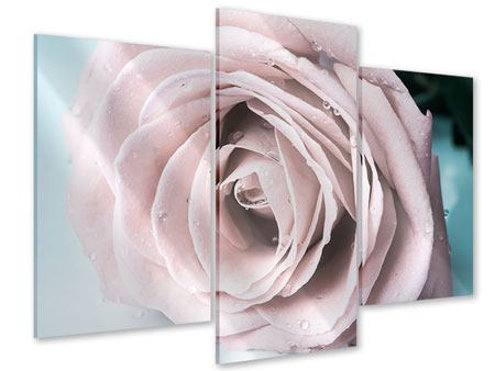 Acrylglasbild 3-teilig modern Pastellrose