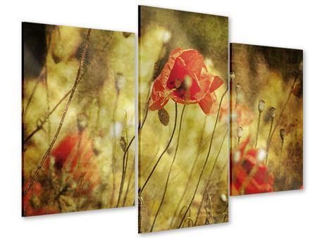 Acrylglasbild 3-teilig modern Der wilde Mohn