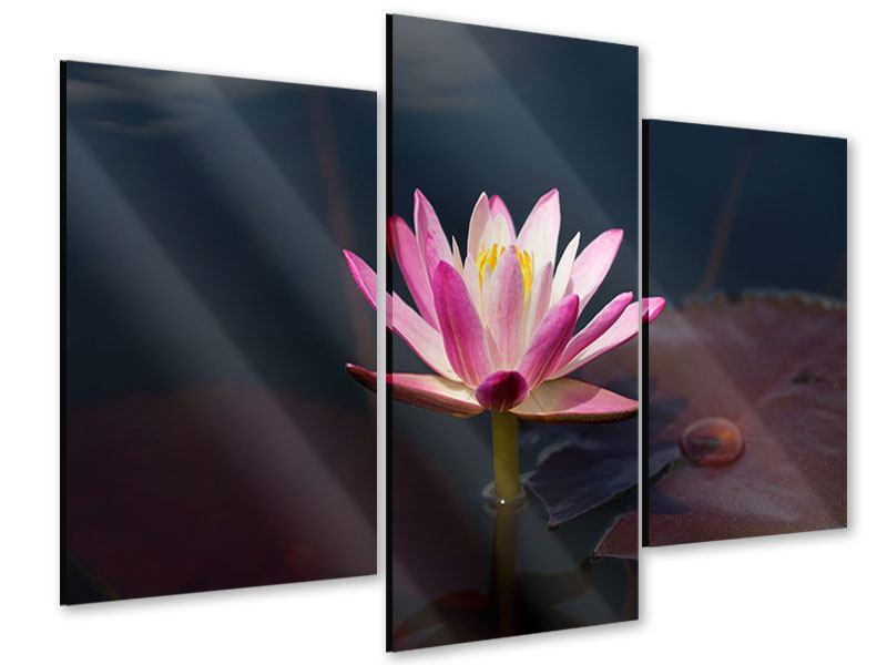 Acrylglasbild 3-teilig modern Seerose in der Abenddämmerung