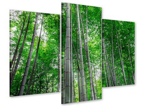 Acrylglasbild 3-teilig modern Bambuswald
