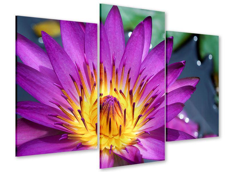 Acrylglasbild 3-teilig modern Makro Seerose in Lila