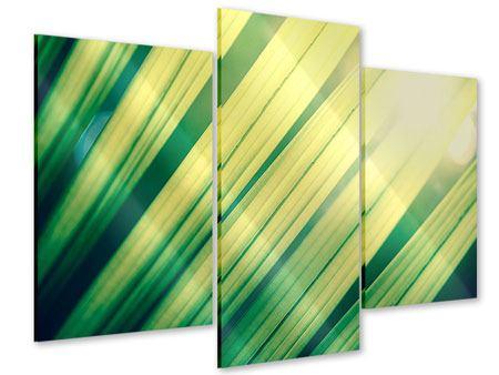 Acrylglasbild 3-teilig modern Beleuchtetes Palmblatt