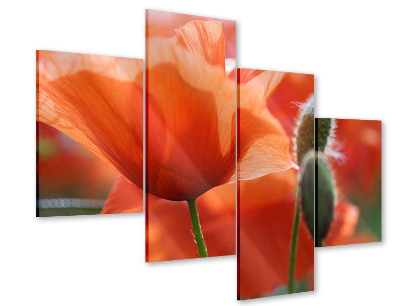 Acrylglasbild 4-teilig modern Klatschmohn XXL