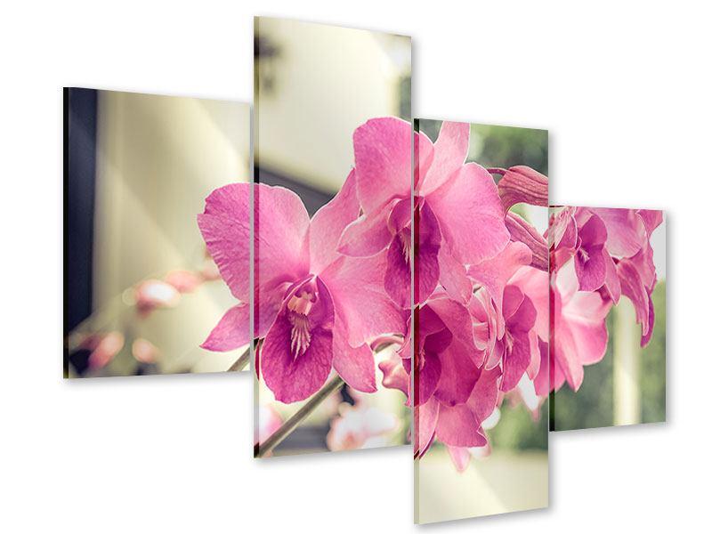 Acrylglasbild 4-teilig modern Ein Fensterplatz für die Orchideen