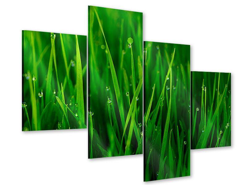 Acrylglasbild 4-teilig modern Gras mit Morgentau