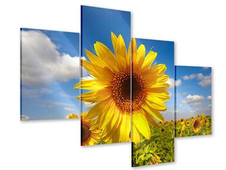 Acrylglasbild 4-teilig modern Das Feld der Sonnenblumen