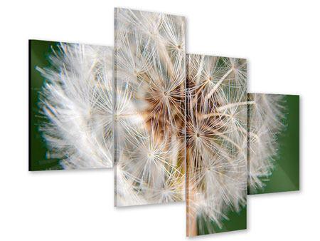 Acrylglasbild 4-teilig modern Riesenlöwenzahn