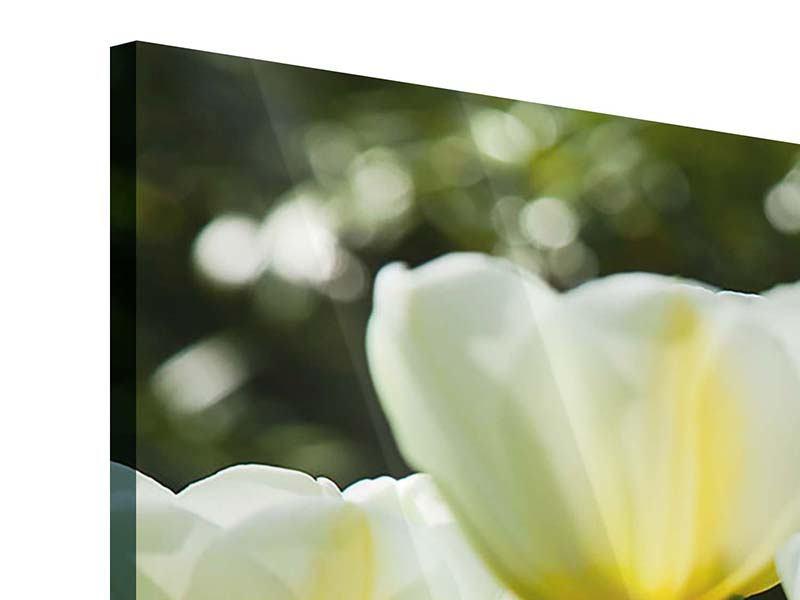 Acrylglasbild 4-teilig modern Tulpen bei Sonnenuntergang