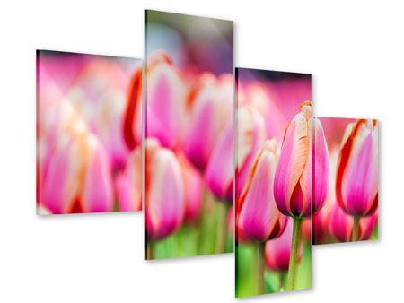 Acrylglasbild 4-teilig modern Pretty in Pink