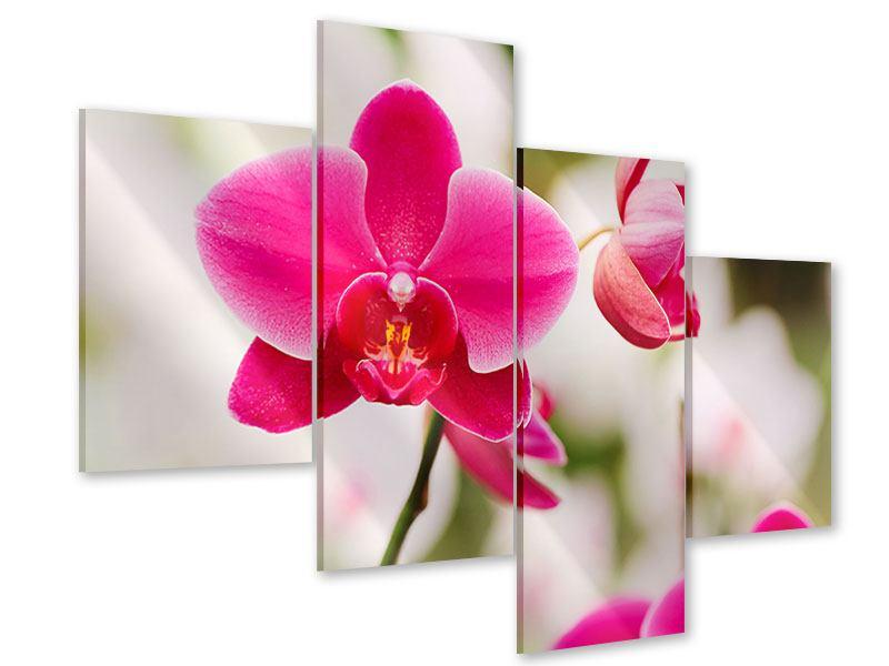 Acrylglasbild 4-teilig modern Perspektivische Orchideen