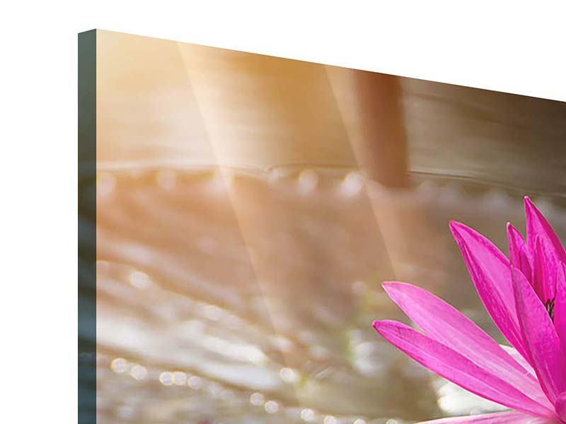 Acrylglasbild 4-teilig modern Seerosen im Morgentau