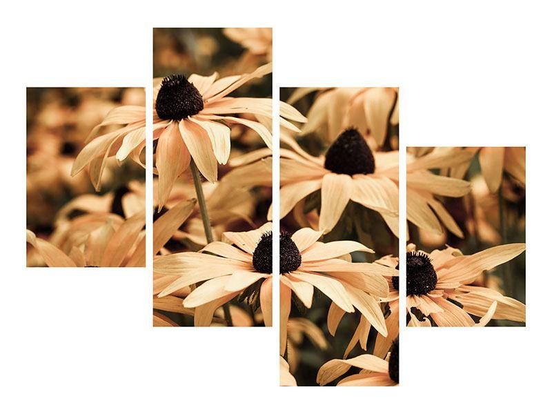 Acrylglasbild 4-teilig modern Margeriten in Sepia