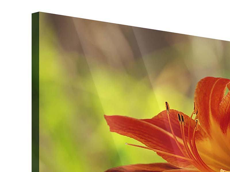 Acrylglasbild 4-teilig modern Lilien in der Natur
