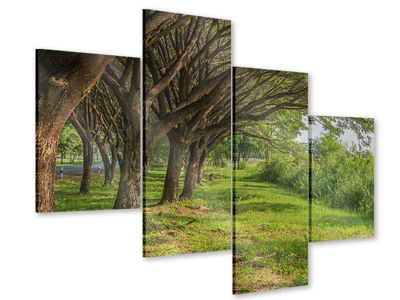 Acrylglasbild 4-teilig modern Alter Baumbestand