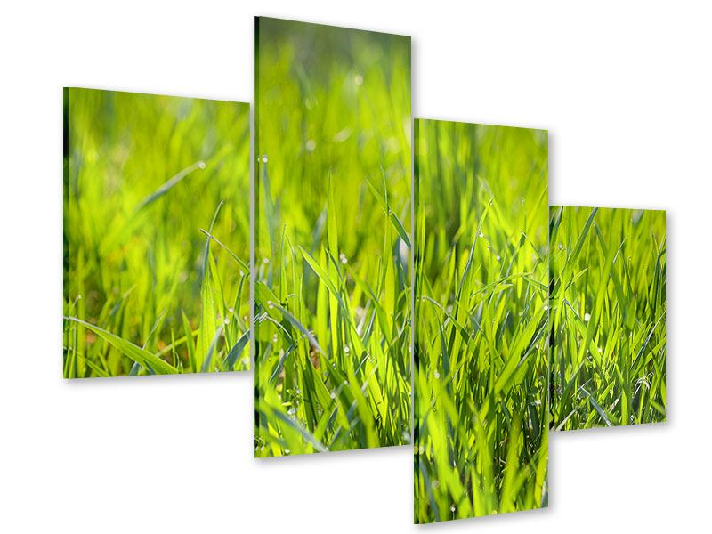 Acrylglasbild 4-teilig modern Gras im Morgentau