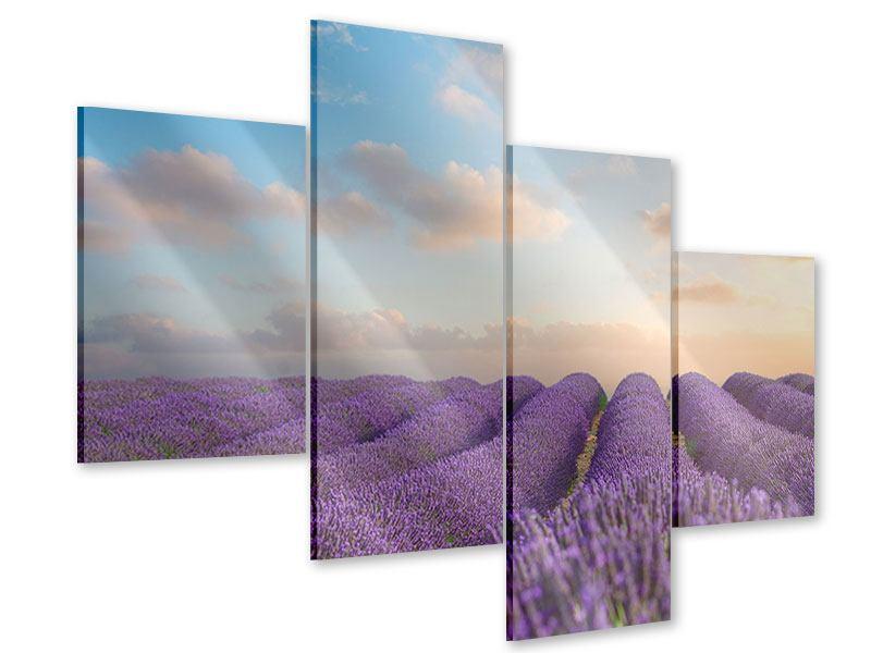 Acrylglasbild 4-teilig modern Das blühende Lavendelfeld