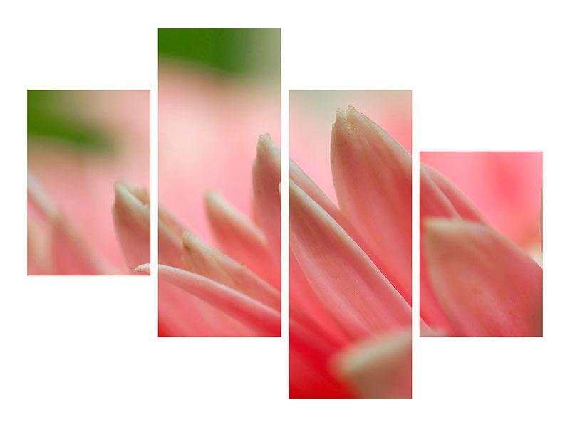 Acrylglasbild 4-teilig modern Close Up einer Blüte