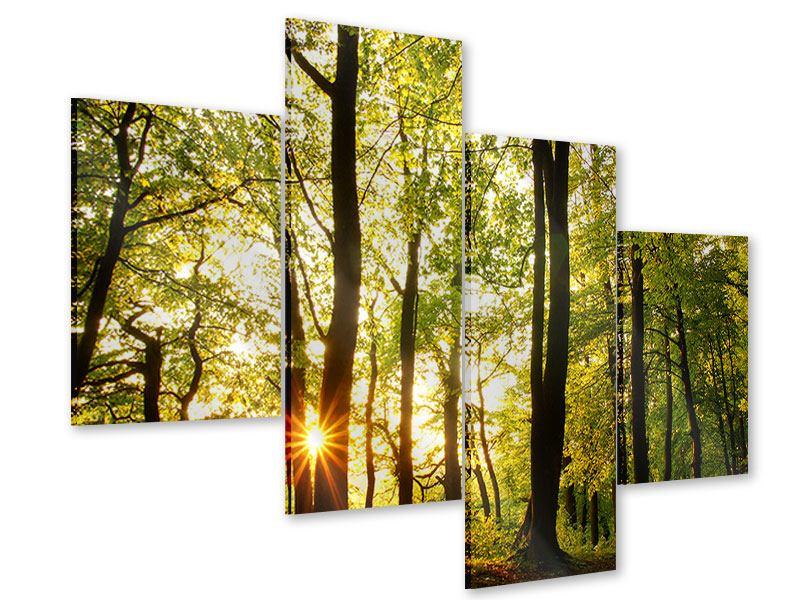 Acrylglasbild 4-teilig modern Sonnenuntergang zwischen den Bäumen
