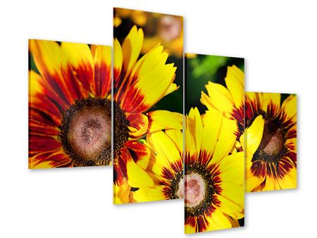 Acrylglasbild 4-teilig modern Reife Sonnenblumen