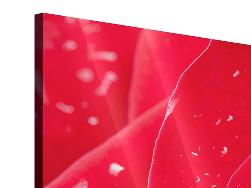 Acrylglasbild 4-teilig modern Rote Rose im Morgentau