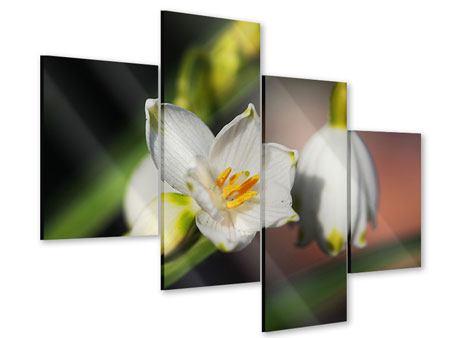 Acrylglasbild 4-teilig modern Schneeglöckchen XXL